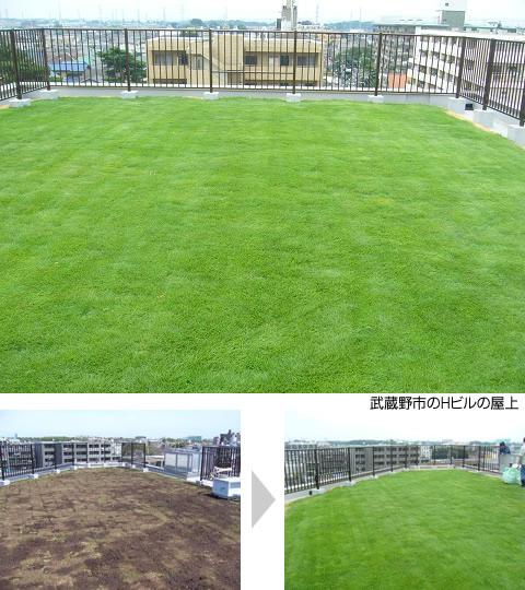 会社の屋上を緑化した例